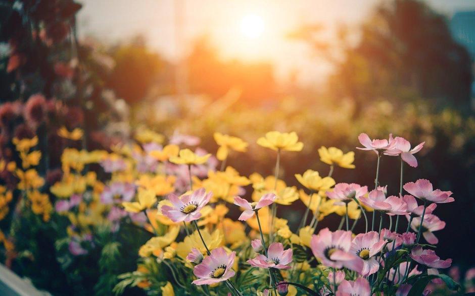 Adquiere los conocimientos necesarios para que tu jardín sea sostenible.